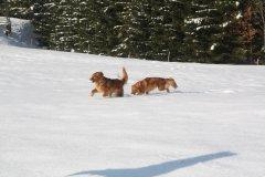 Ausflug im Schnee