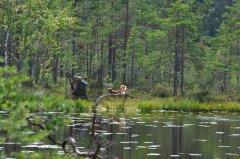 Jagdprüfung Schweden: Tolling an der Tarnblende