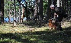 Jagdprüfung Schweden: Anpirschen ans Wasser hinter die Tarnblende